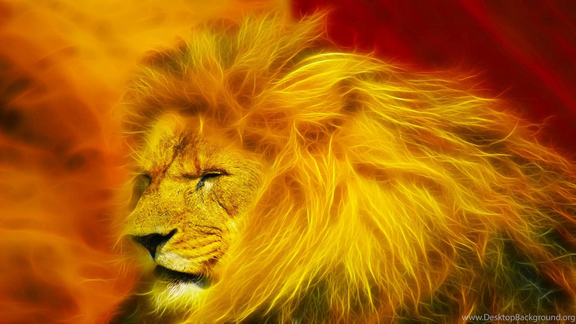 Abstract Lion Wallpapers Hd Images New Desktop Background