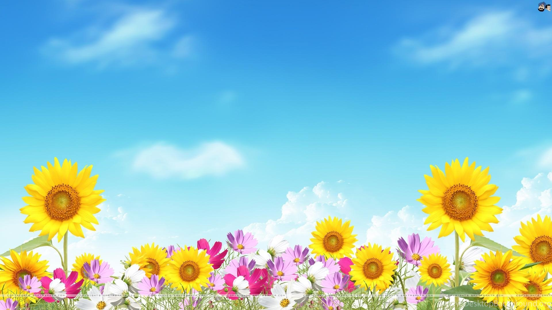 Summer backgrounds wallpapers and backgrounds desktop background popular voltagebd Images