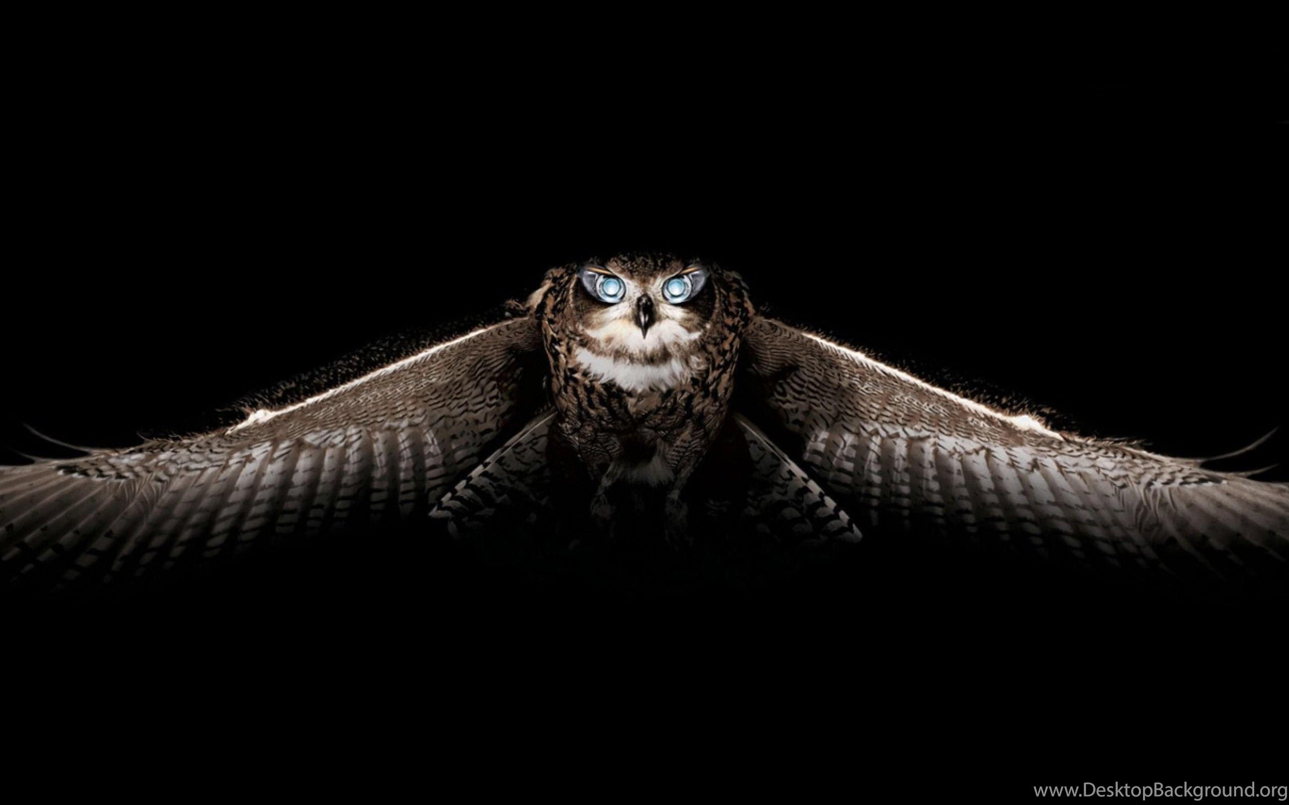 Летящая сова  № 481248 без смс