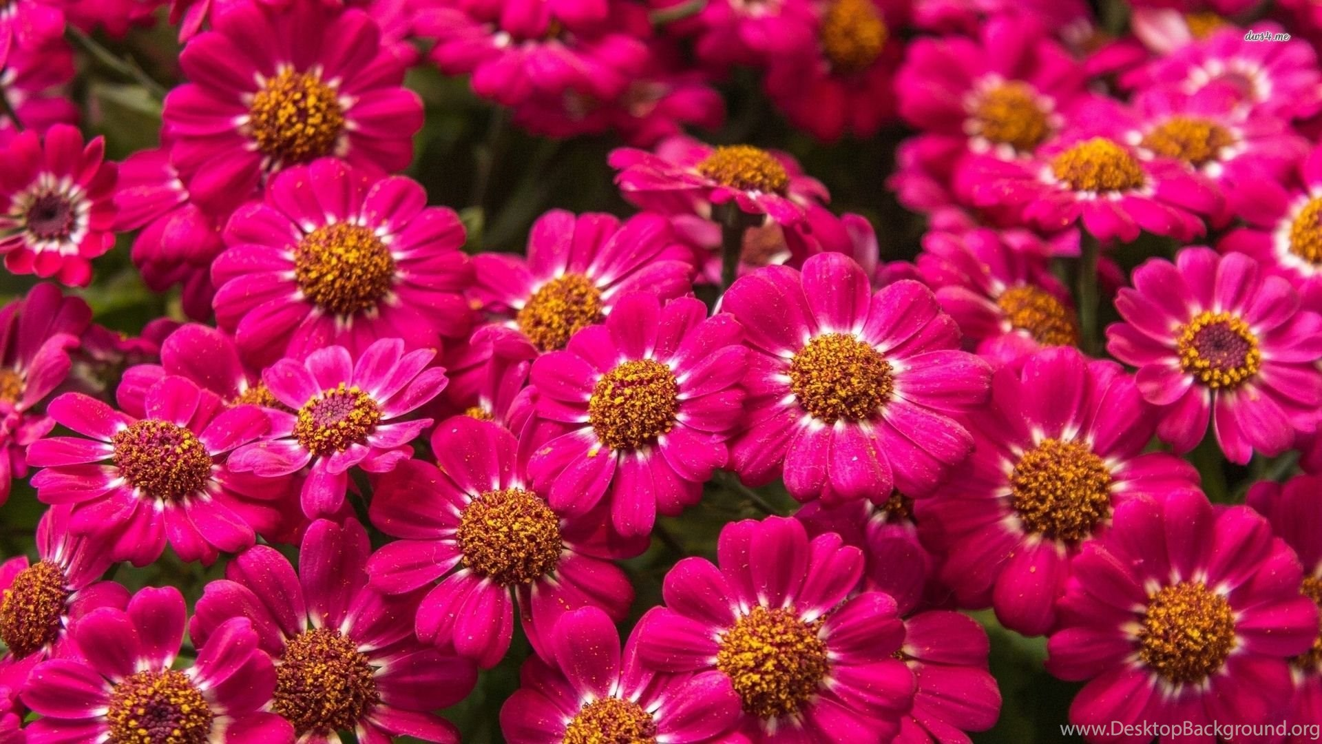 30 amazing free hd flower wallpapers desktop background