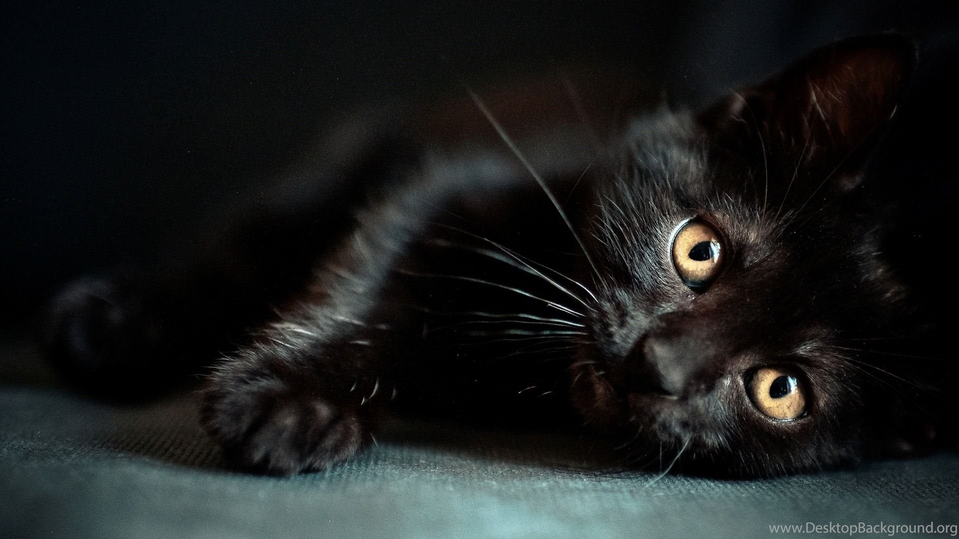 Halloween Black Cat Cute Wallpaper Desktop Background