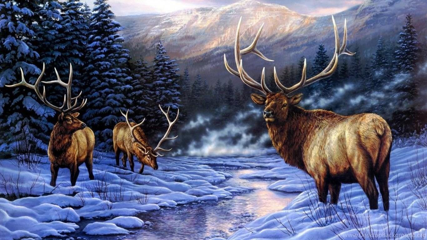 deer wallpapers page 13 mule deer doe snow winter animals