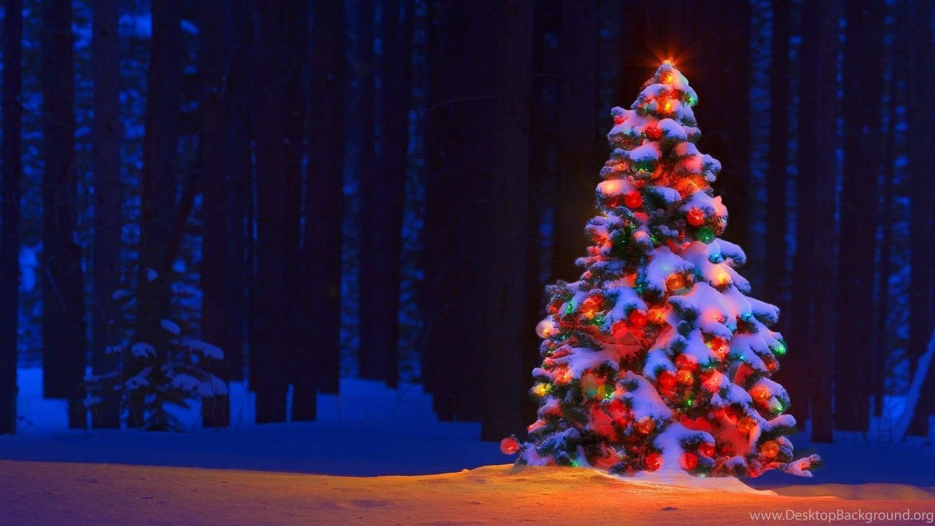 27648 white christmas tree lights wallpapers happy
