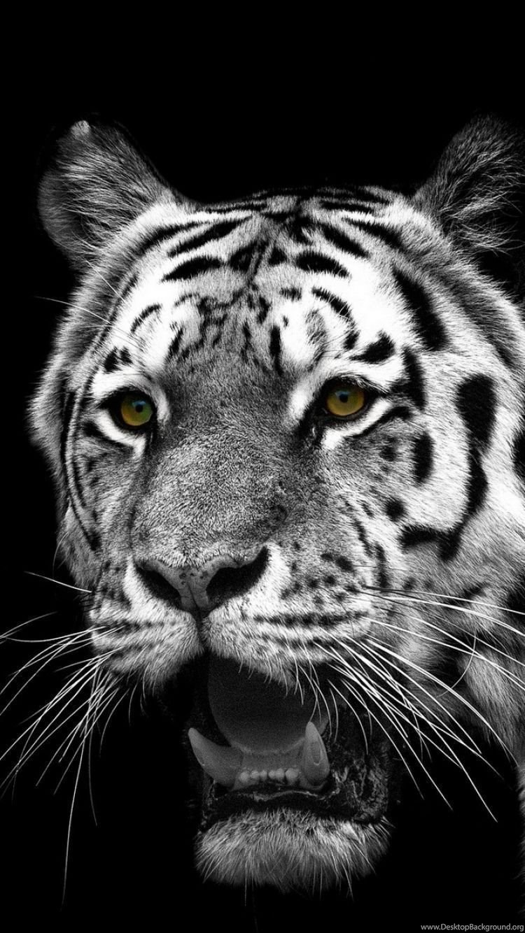 IPhone 6S Animal/White Tiger Wallpapers ID: 301455 Desktop