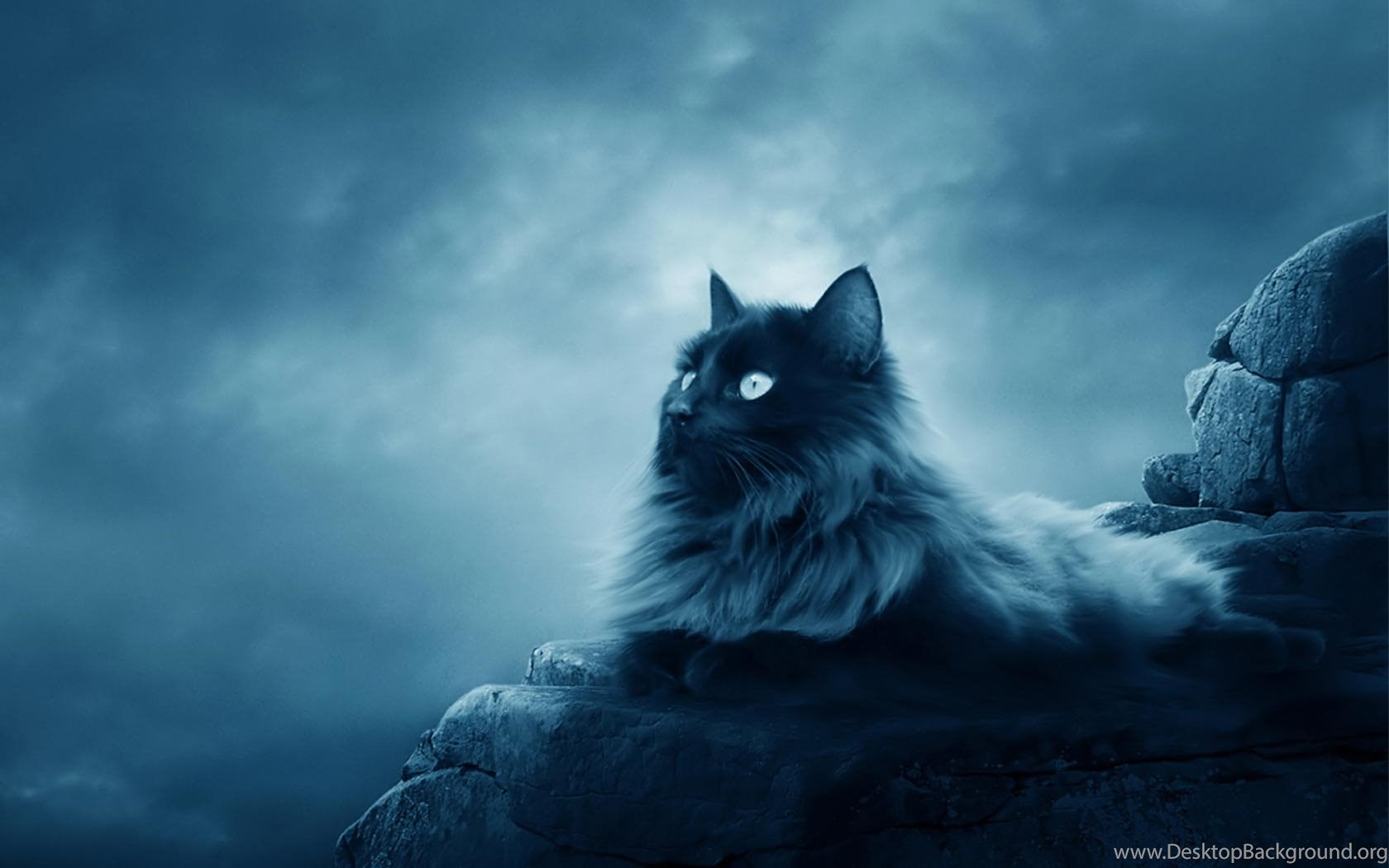 Cool Cat Hd Wallpapers Desktop Background
