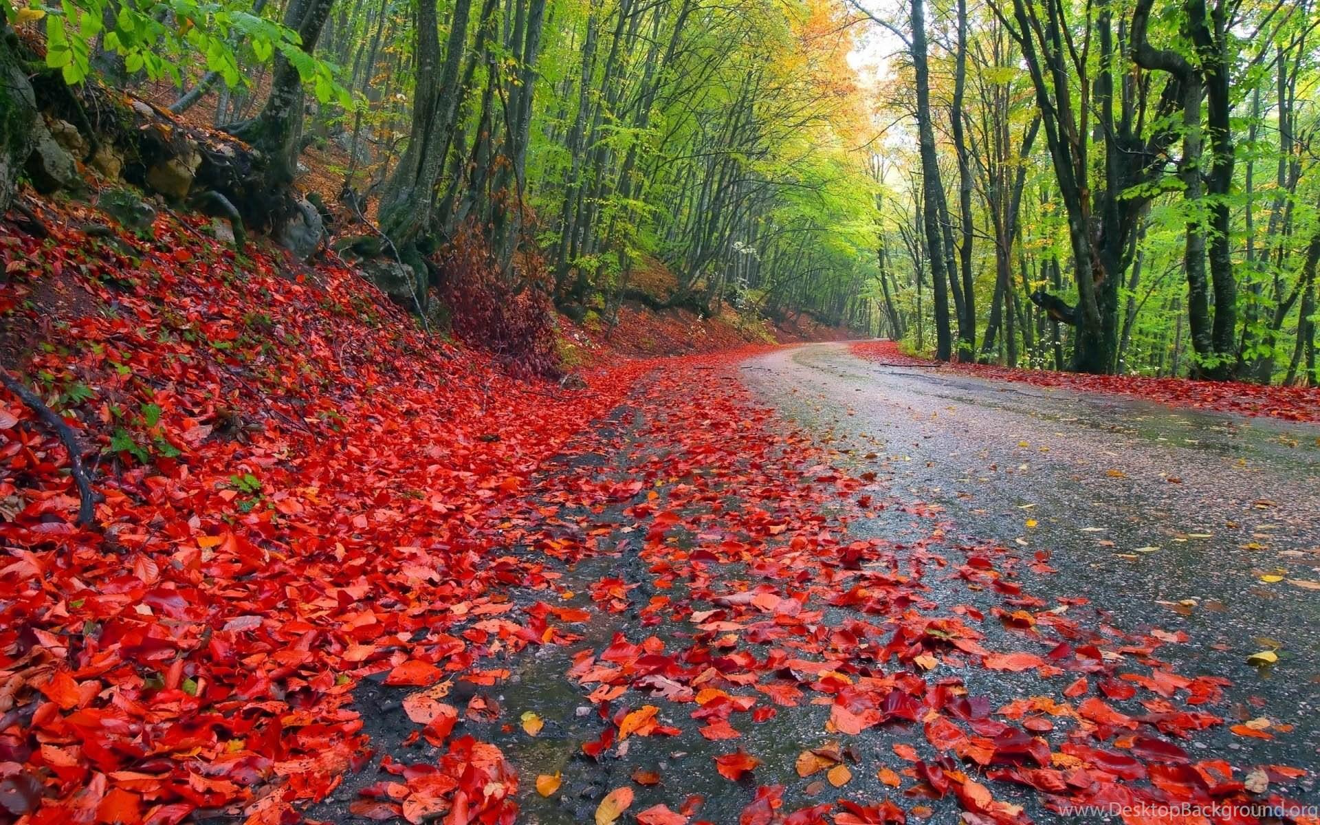 Beautiful Rainy Seasons Wallpapers TechnoRepublica Desktop Background