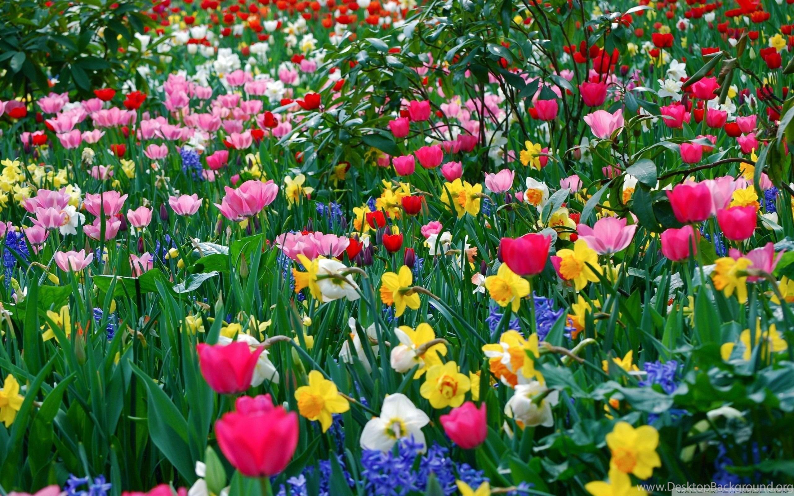 Top Spring Flowers Widescreen 1396 Images For Pinterest Desktop