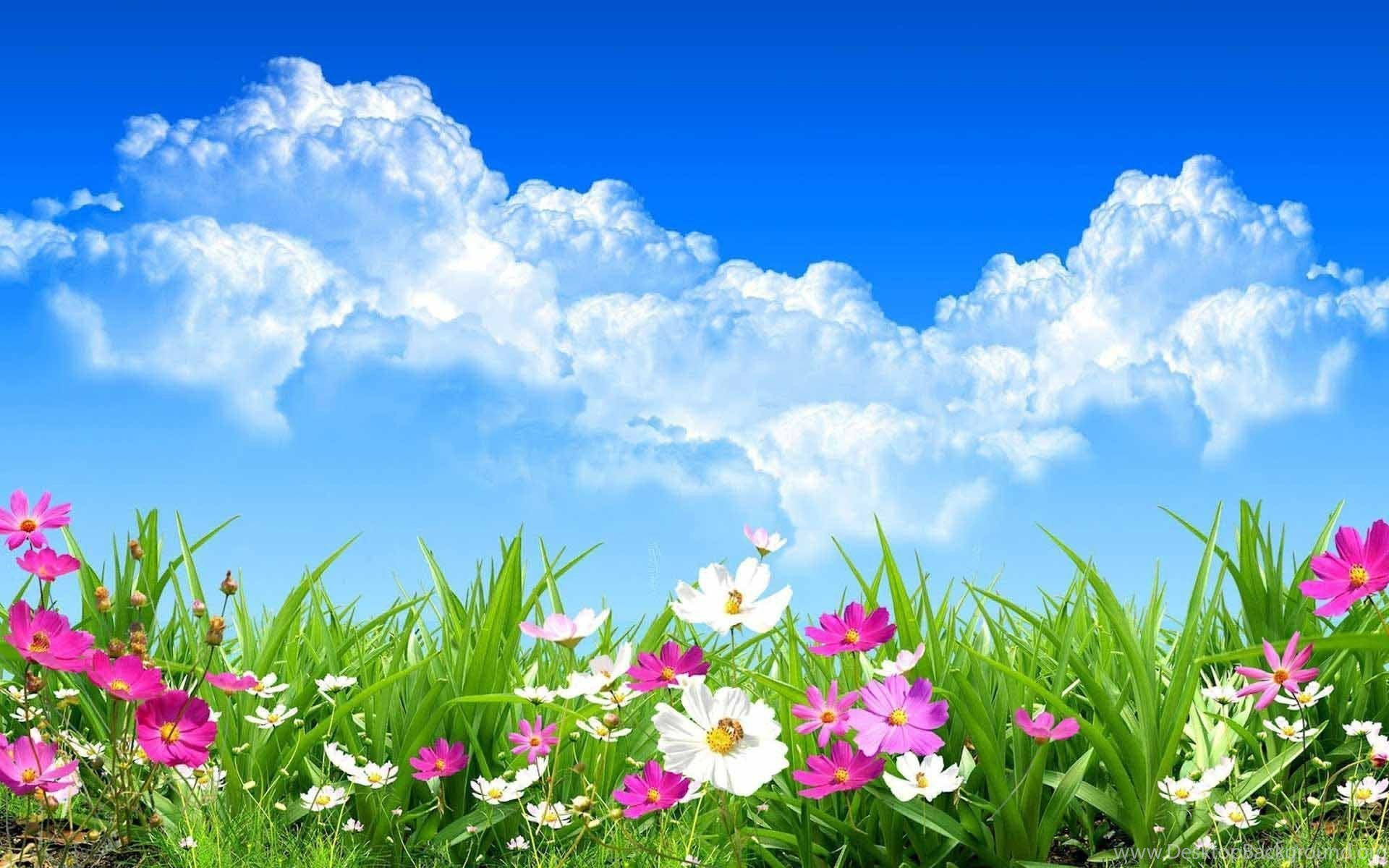 Wild Spring Flowers Wallpapers Hd Download Of Spring Day Desktop