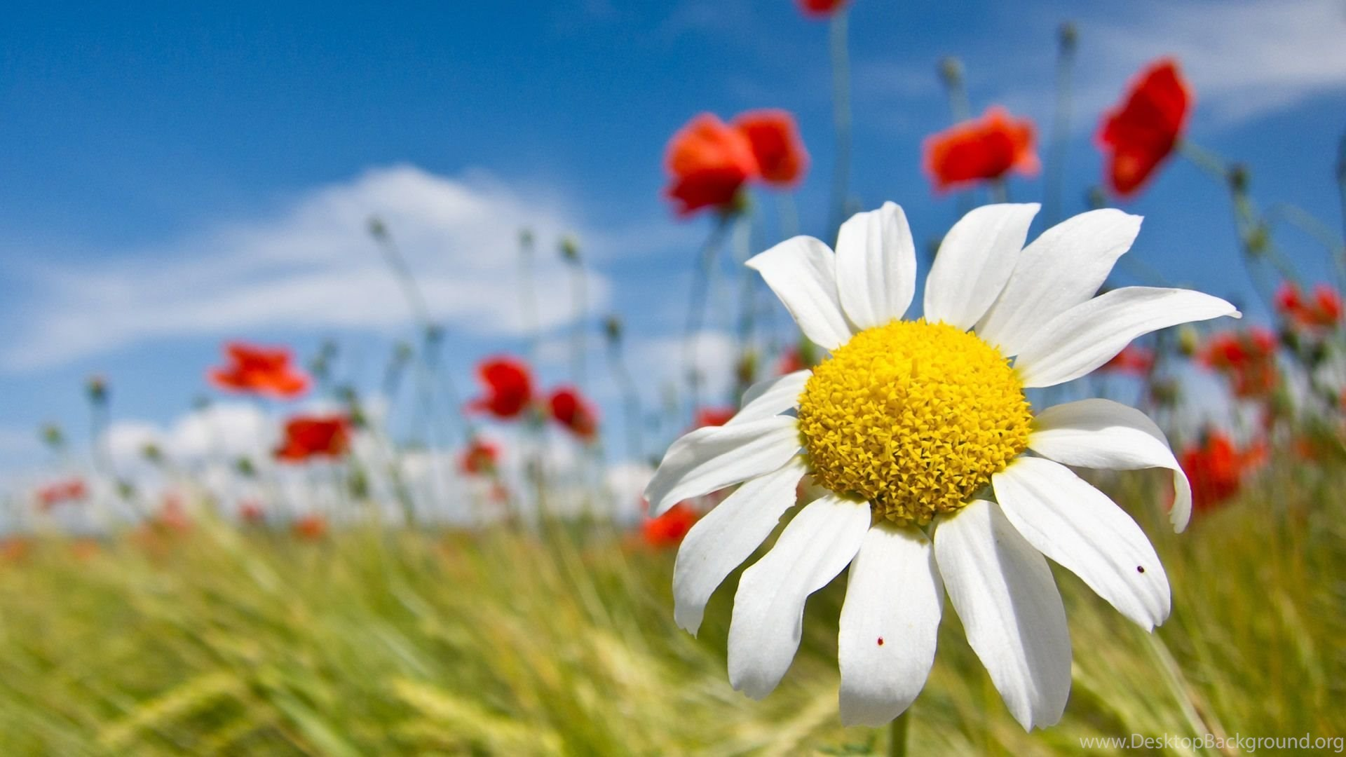 Free Spring Flowers Screensavers And Wallpapers Photos Of Enjoy The