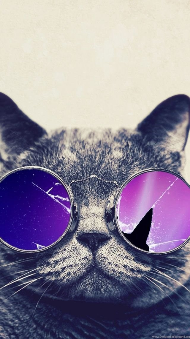 Funny Cat With Big Glasses IPhone 5 Wallpapers Desktop Background