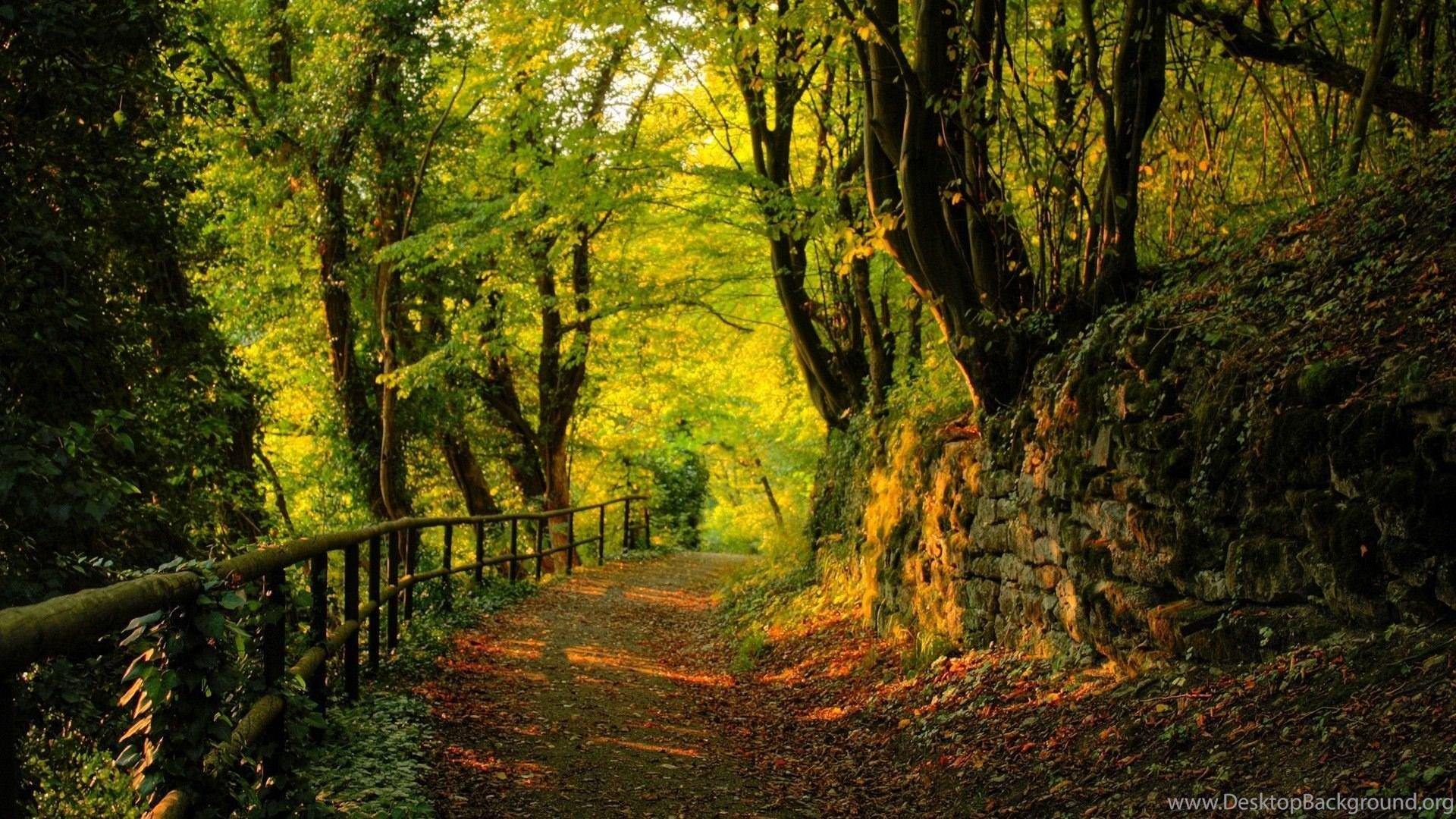 forest road wallpaper backgrounds wallpapers nature wallpapers hd