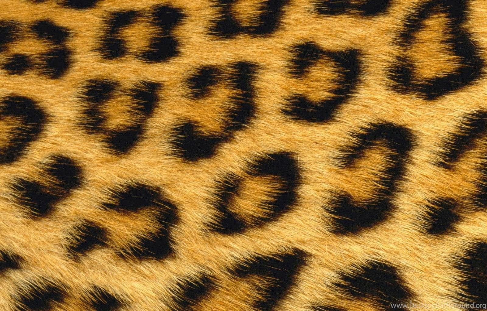 Cool animal print wallpapers