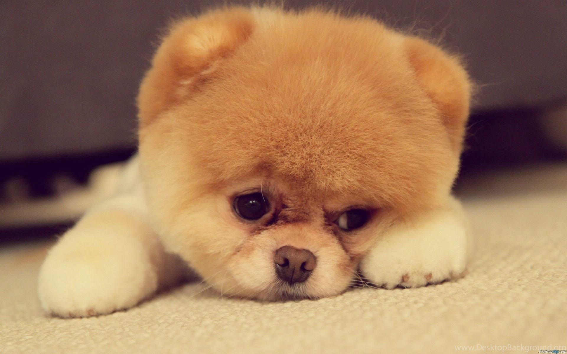 Little Puppy Wallpapers For Desktop Mobile Of Cute