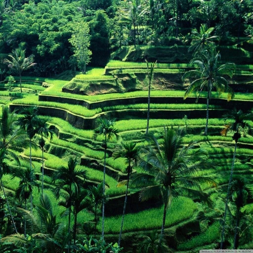 Bali, Indonesia HD Desktop Wallpapers : High Definition