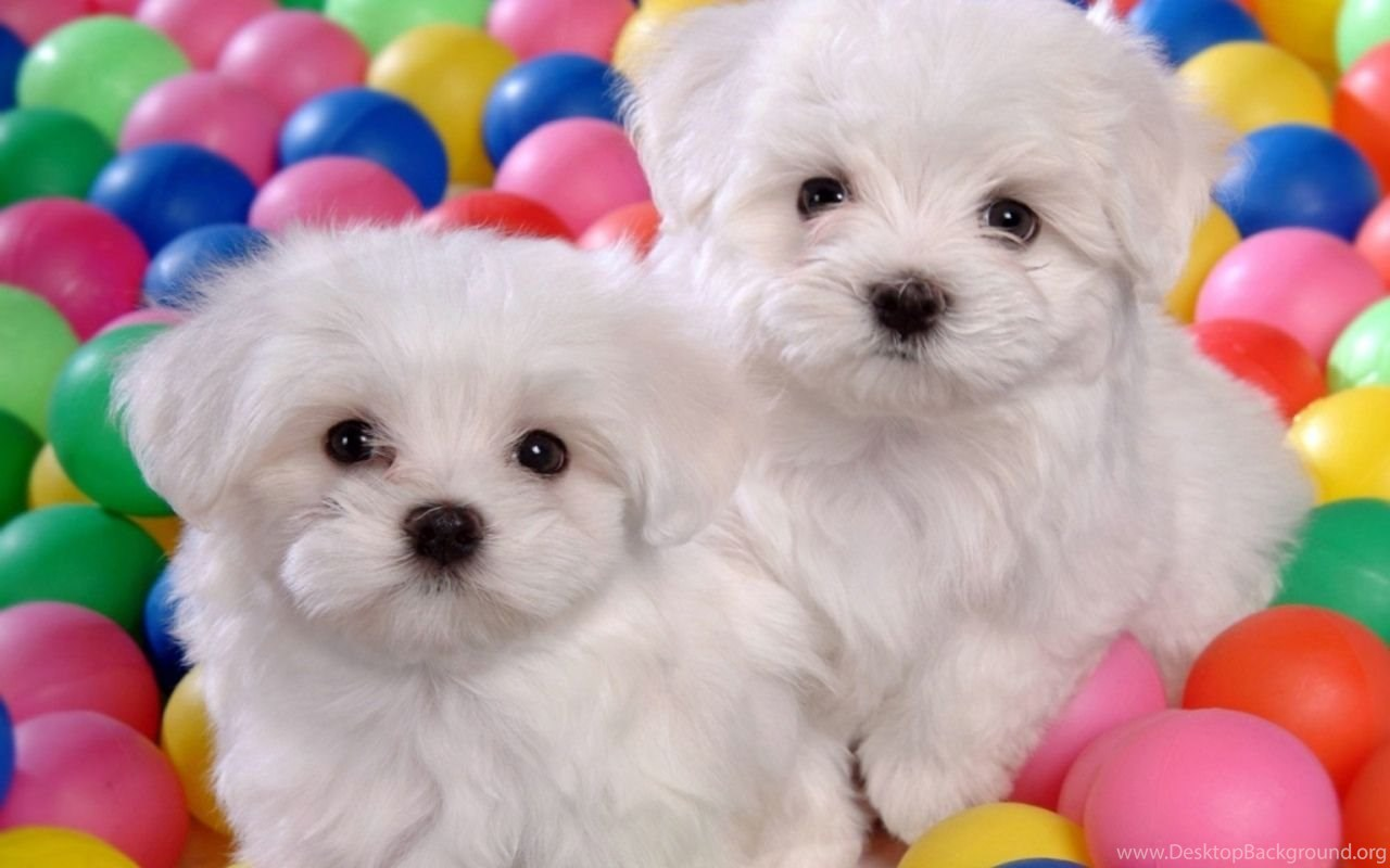 Baby Puppies Wallpapers Wallpapers