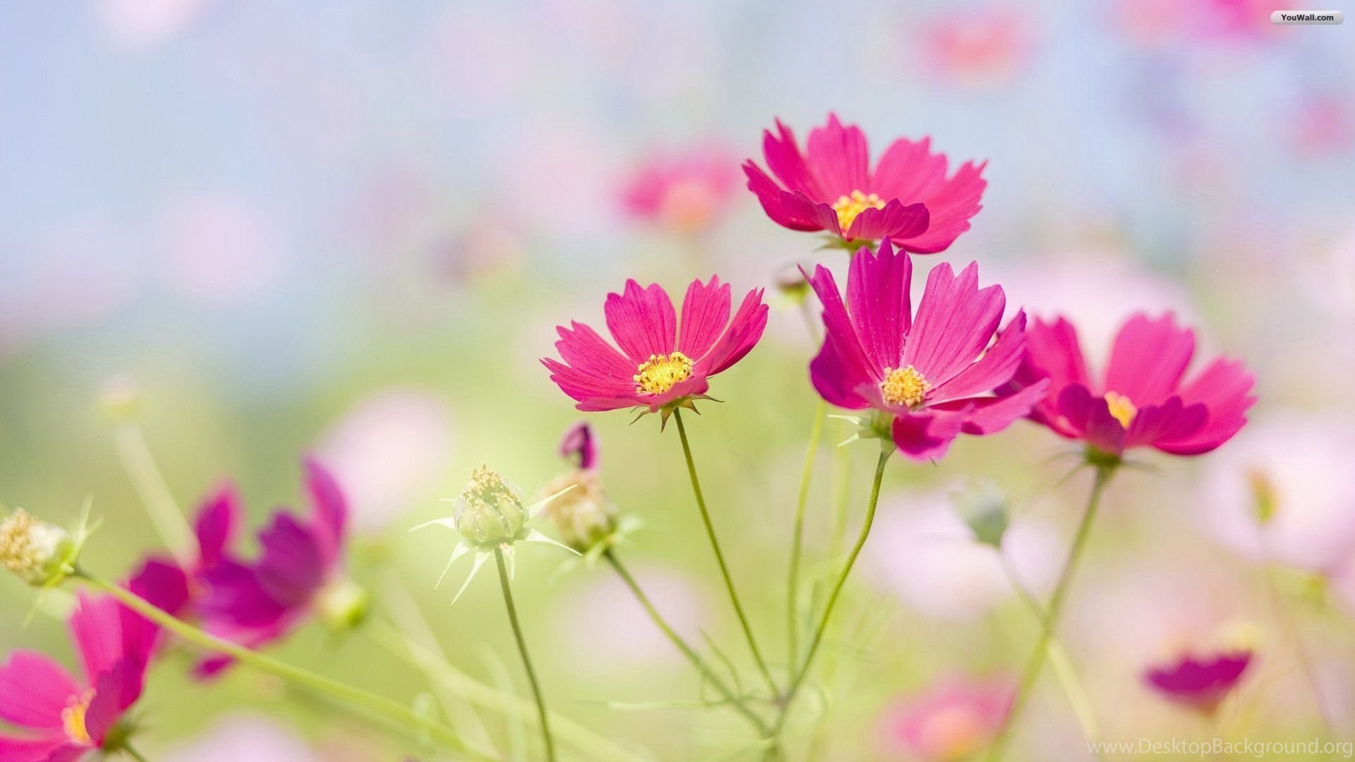 Pretty flowers backgrounds desktop background popular mightylinksfo