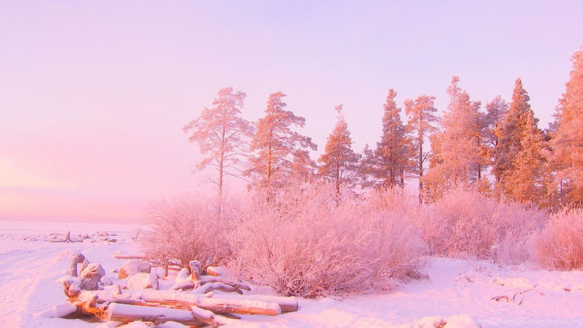 Pink Sunset Light Over Snowy Forest 1920x1080 HD Wallpapers And