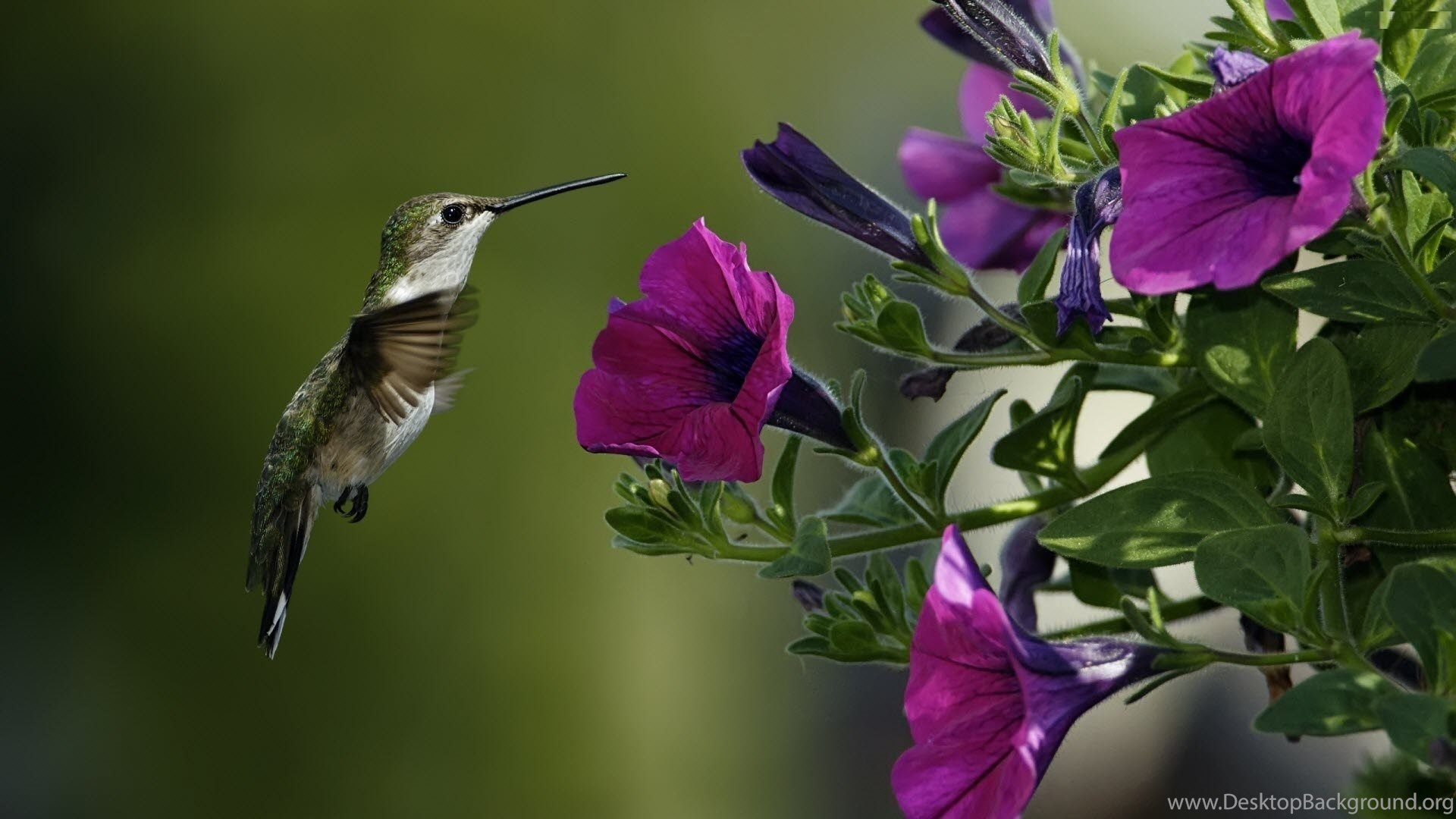 Purple Flowers And Bird Full Screen High Resolution Wallpapers