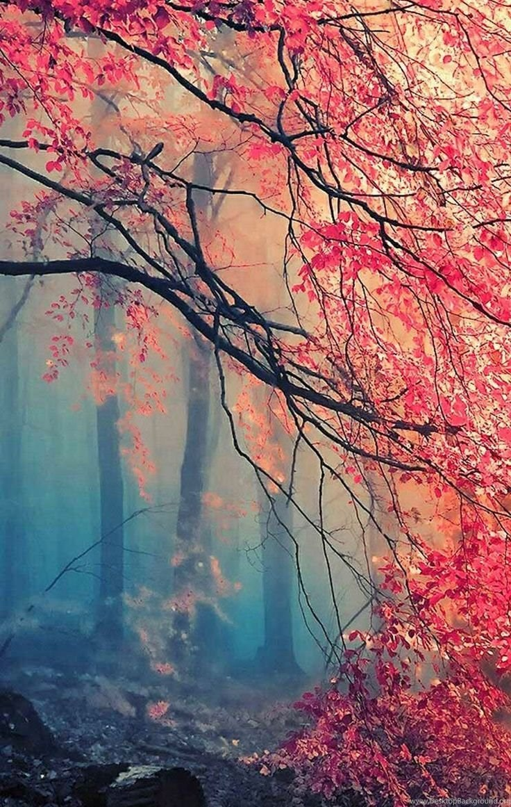 Fall Wallpapers For Iphone 4 And