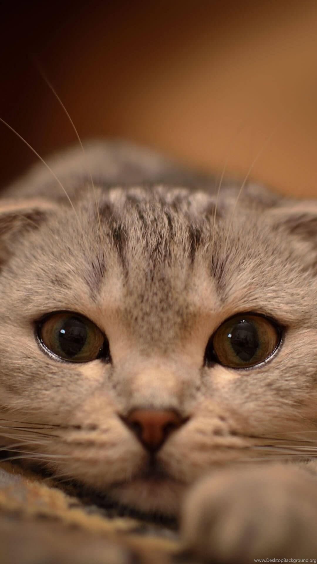 Cute Cat Wallpapers For Iphone 6 Plus Hd Wallpapers Iphone Desktop