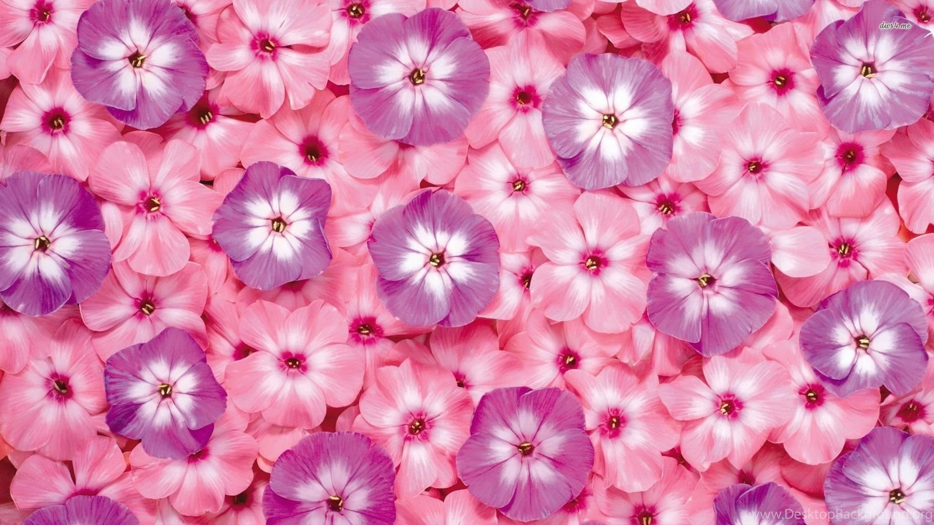Small Pink And Purple Flowers Wallpapers Flower Wallpapers Desktop
