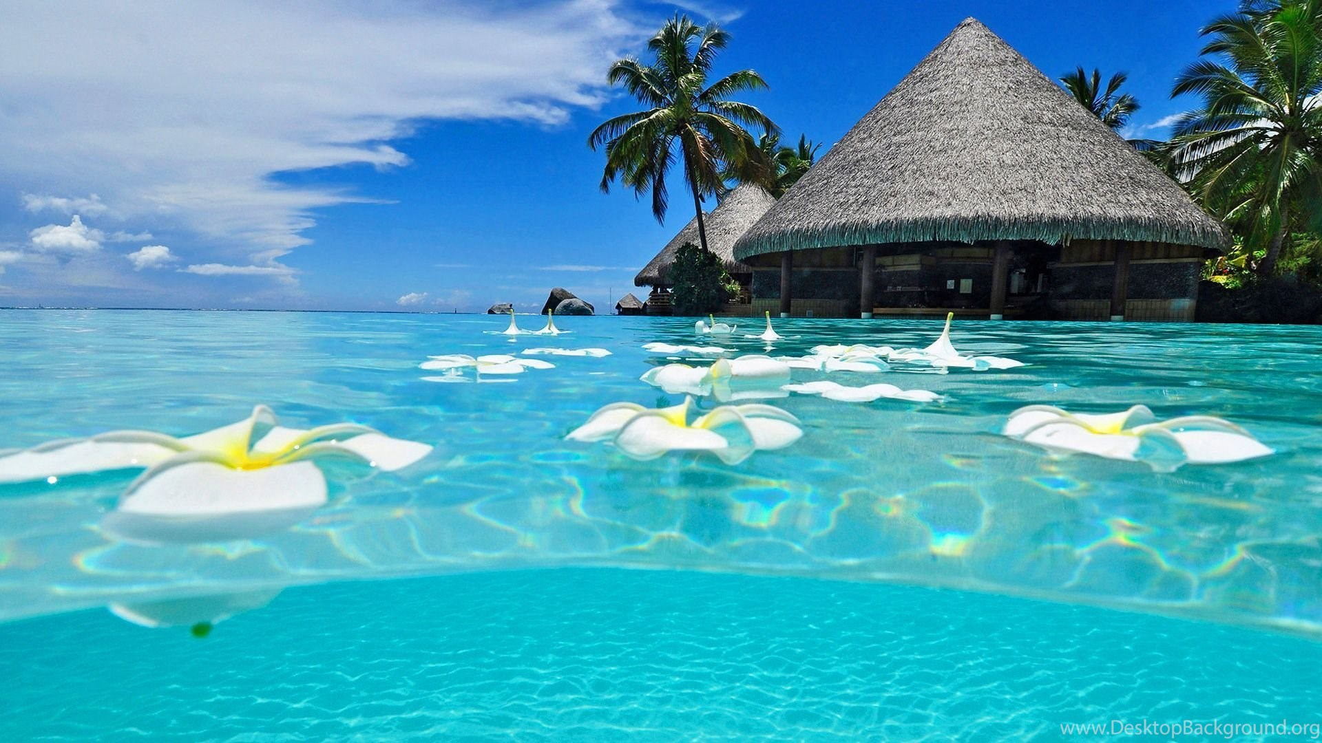 Nature Exotic Beach Tropical Island Wallpapers Mela