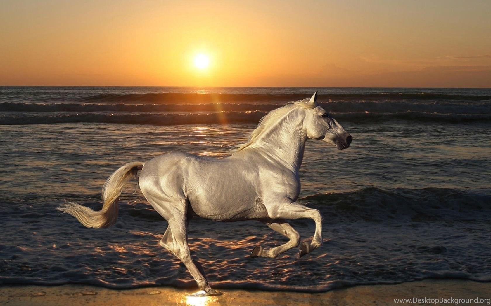 Beautiful Wild Horse Wallpapers For Desktop Zibrato Desktop Background