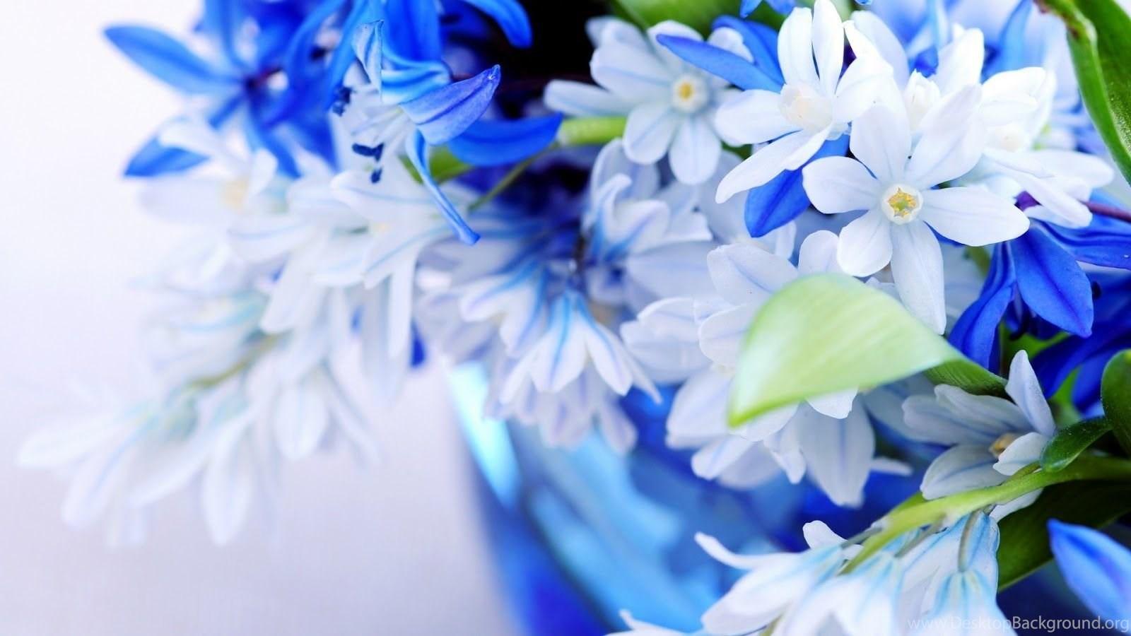 Beautiful flower pictures and wallpapers download desktop background popular izmirmasajfo