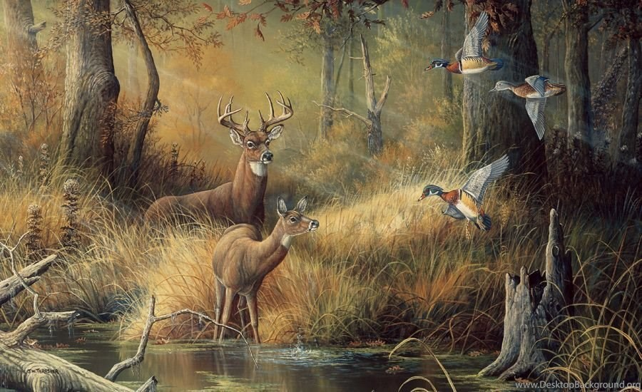 Gallery For Awesome Deer Hunting Wallpapers Desktop Background