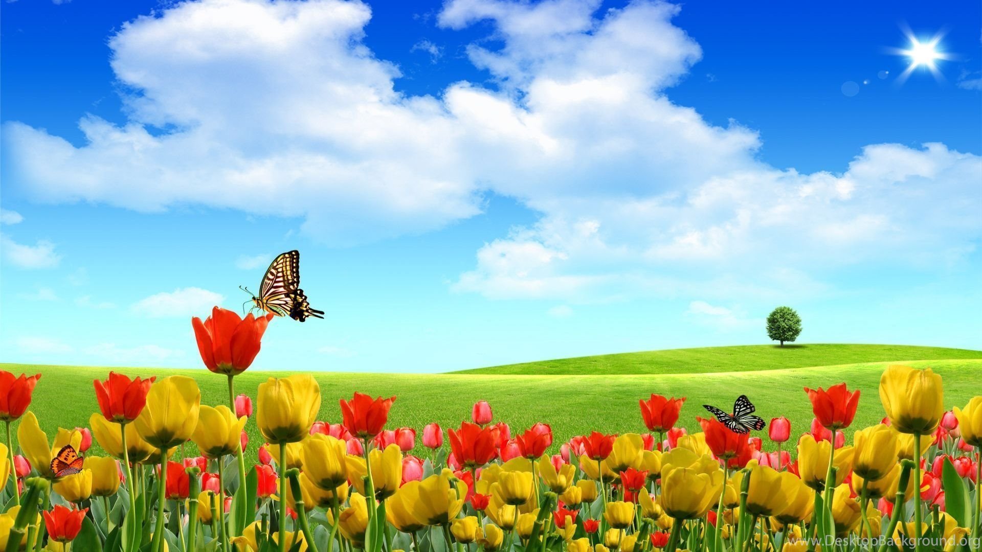 Free Summer Desktop Backgrounds Hd Wallpapers Pretty Desktop Background