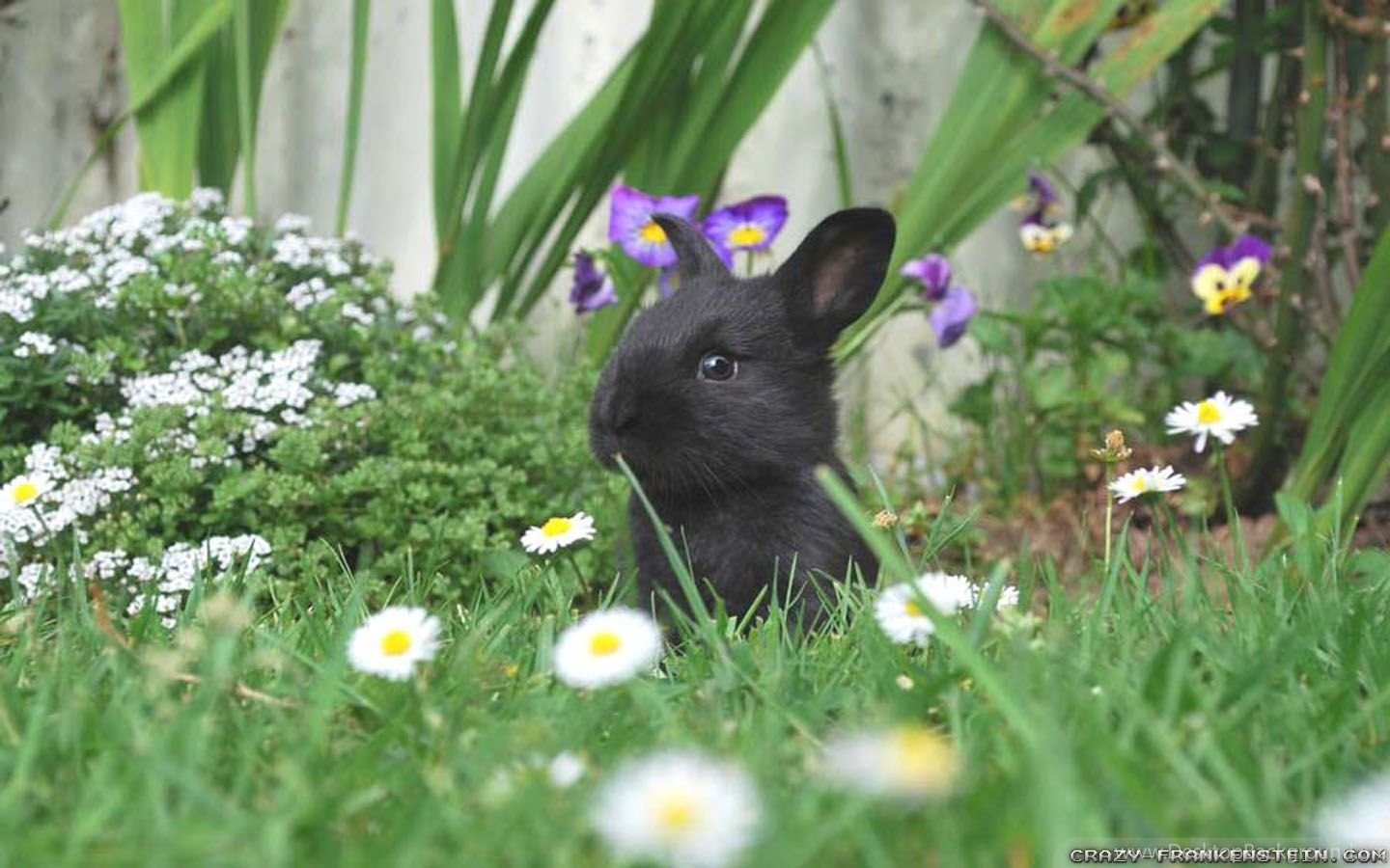 To acquire Animals springtime wallpaper picture trends