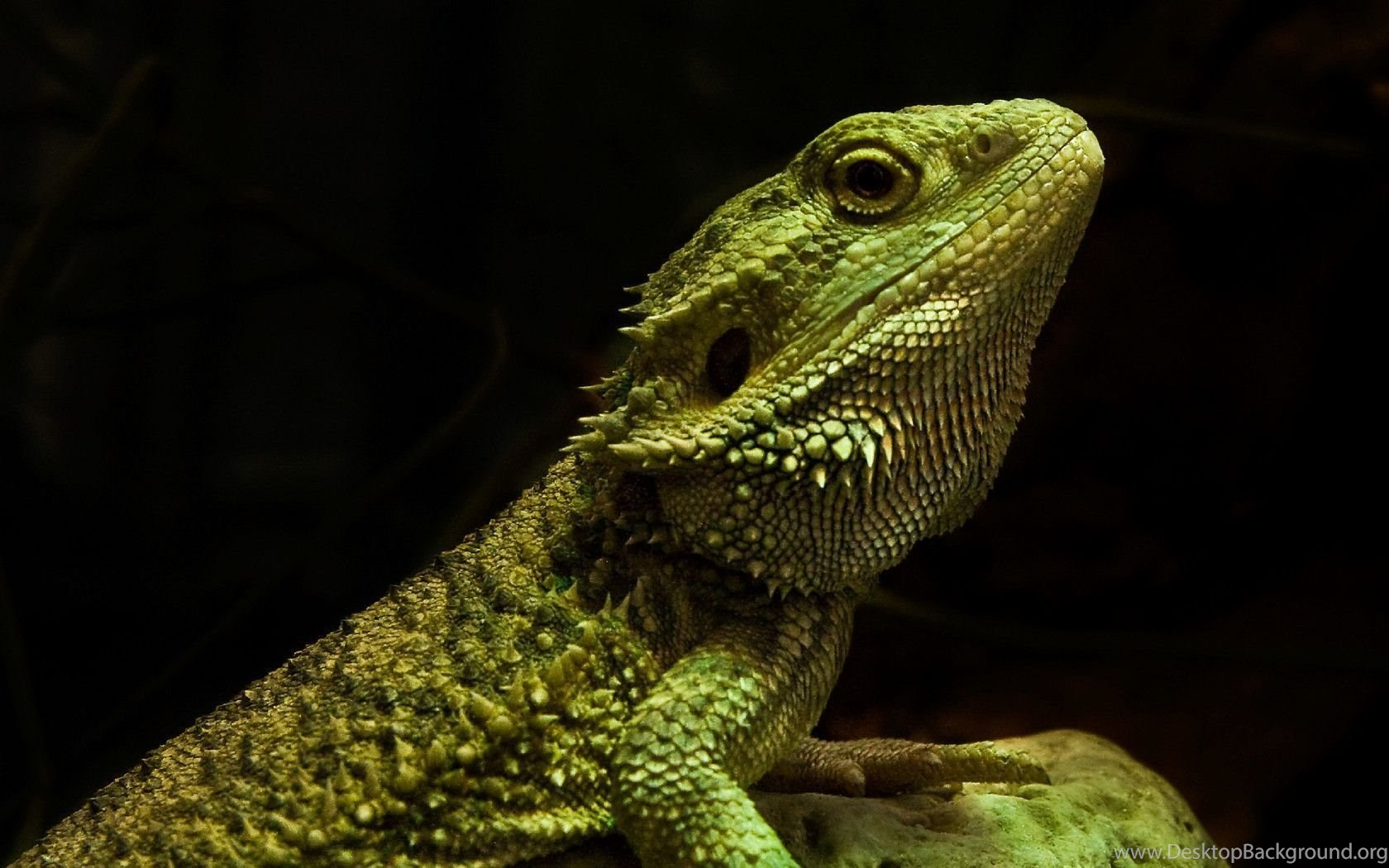 21 Reptile HD Wallpapers Desktop Background