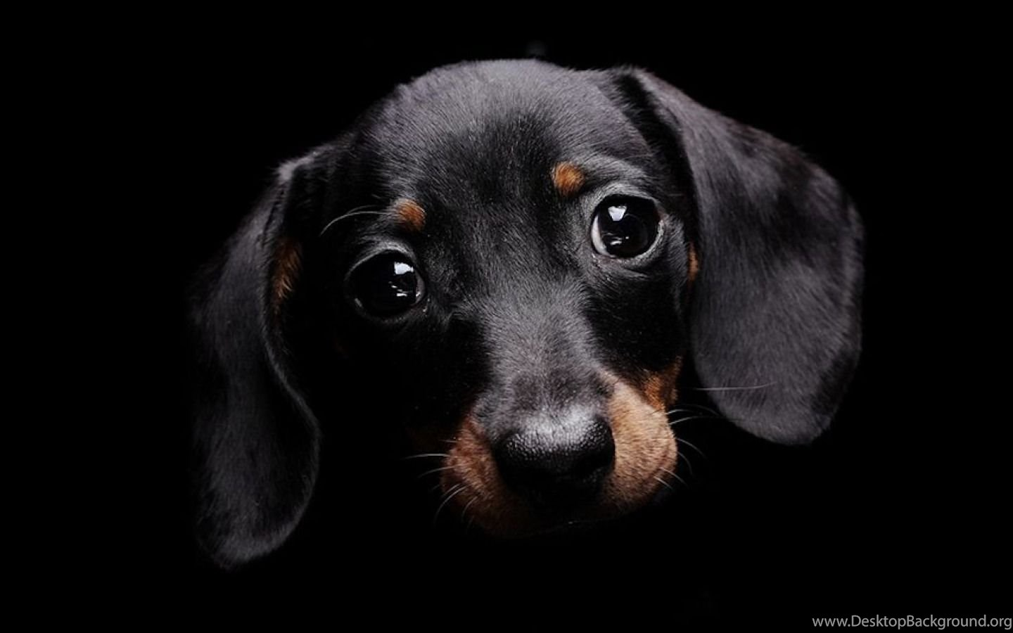 Cute Dog With Sad Eyes Black Backgrounds Wallpapers Dogs ...