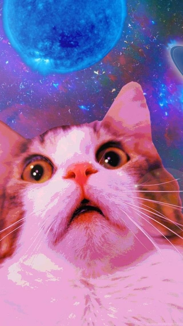 Funny space cat iphone 5 wallpapers desktop background - Space kitty wallpaper ...