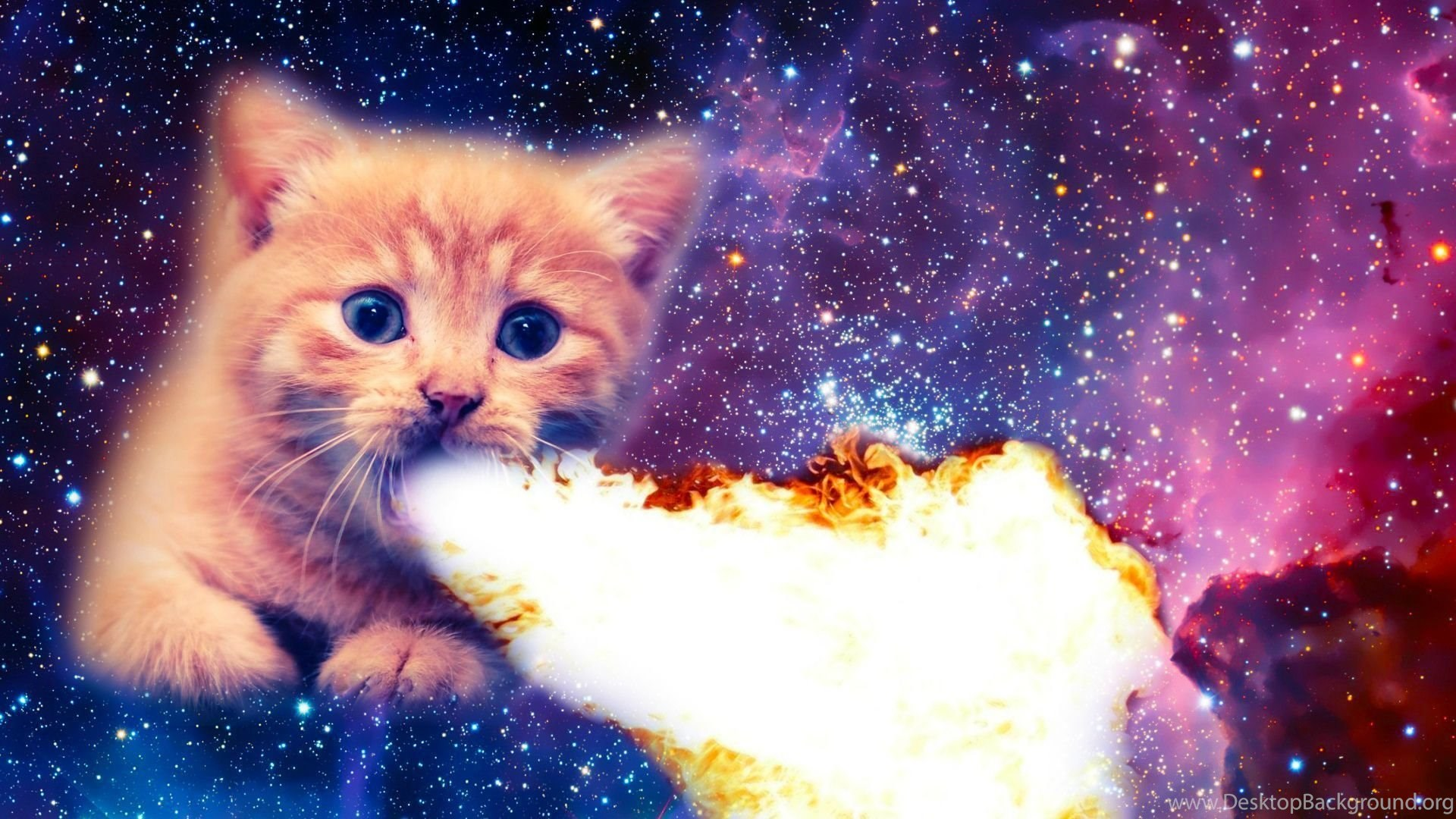 My fire breathing space cat imgur desktop background - Space kitty wallpaper ...