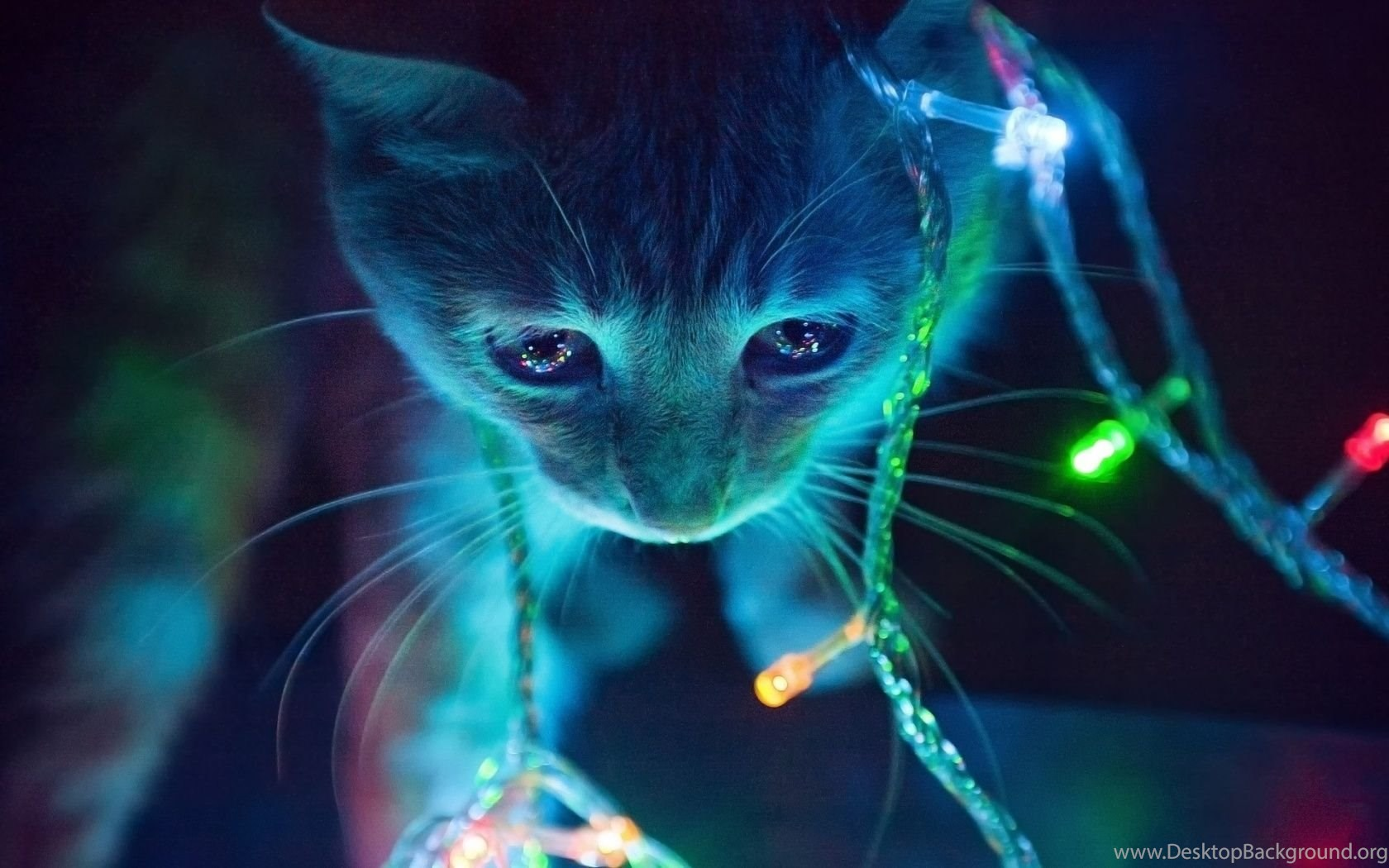 1680x1050 christmas lights cat desktop pc and mac wallpapers desktop