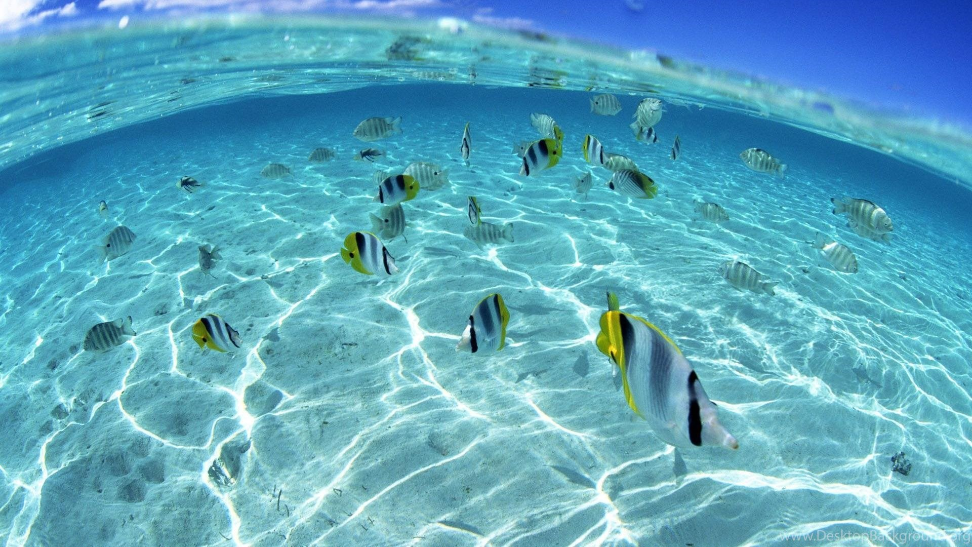 Underwater Wallpapers 3117 HD Wallnos Desktop Background