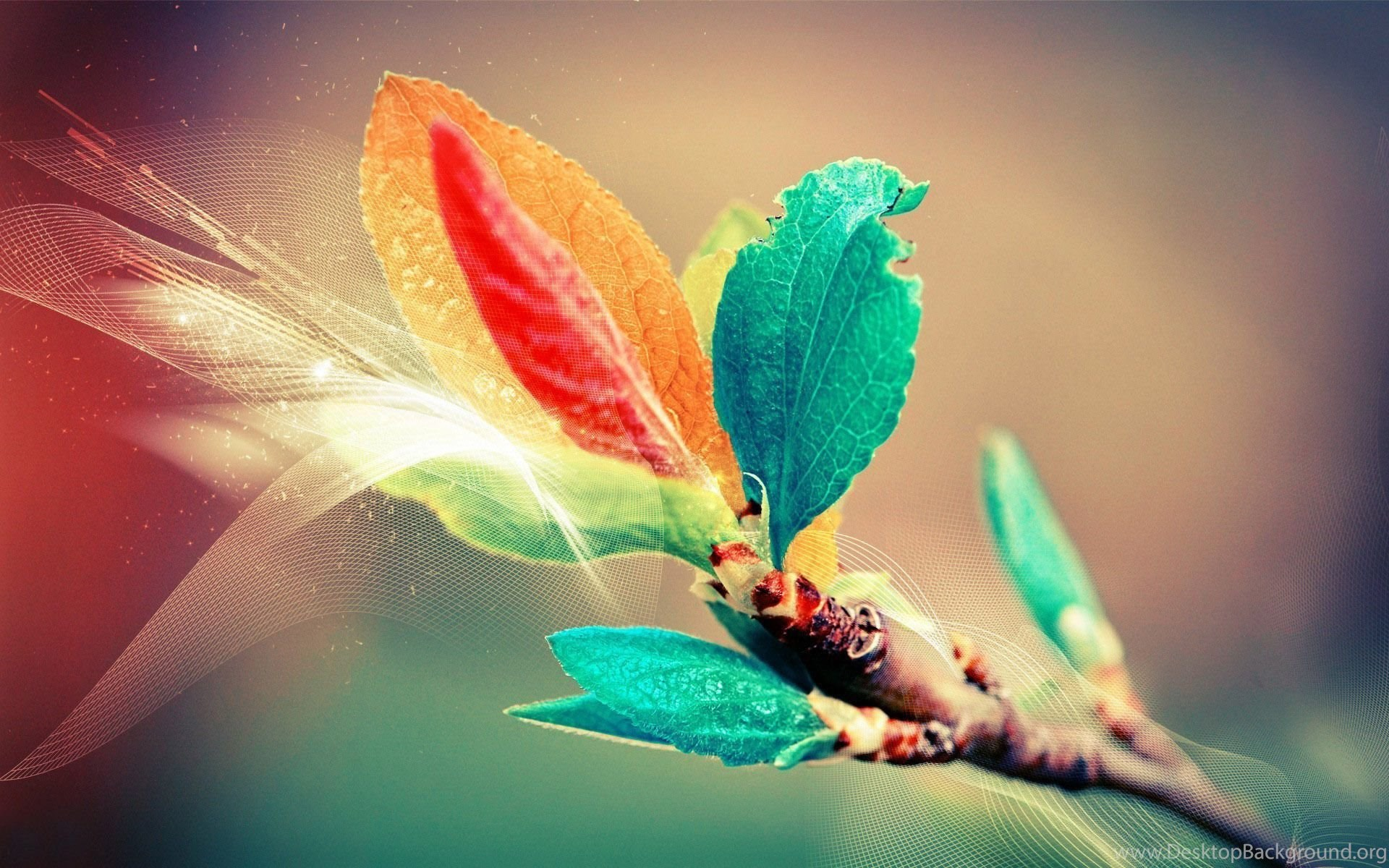 Top Colorful Leaves Wallpapers And Images For Pinterest Desktop