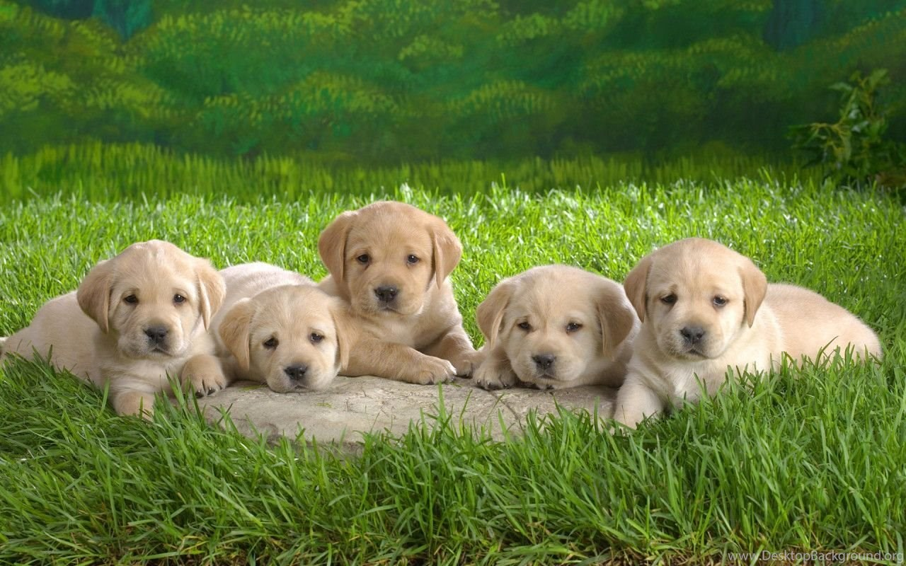 Cute Funny Puppy Dog Hd Animal Wallpaper Backgrounds Wallpapers