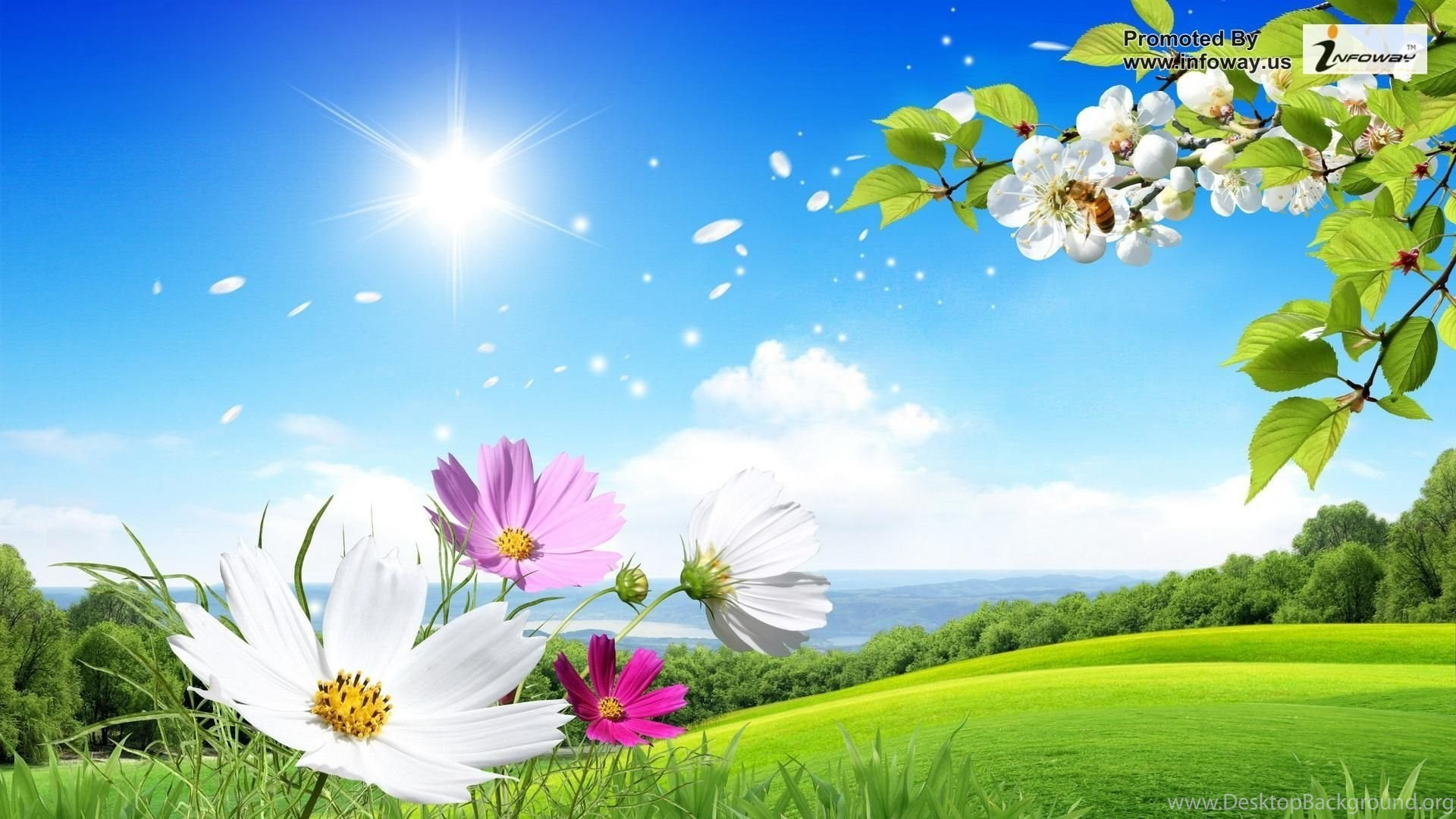 Hd Wallpapers Desktop Wallpaper Summer Flowers Beautiful Scenery