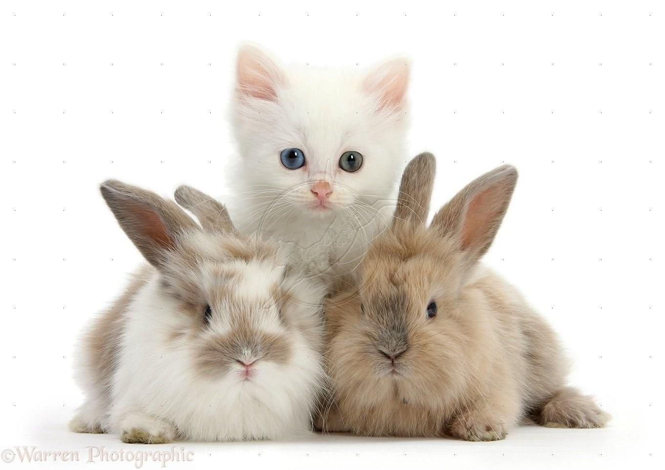 конечно, сами картинка крольчонок с котенком публикации