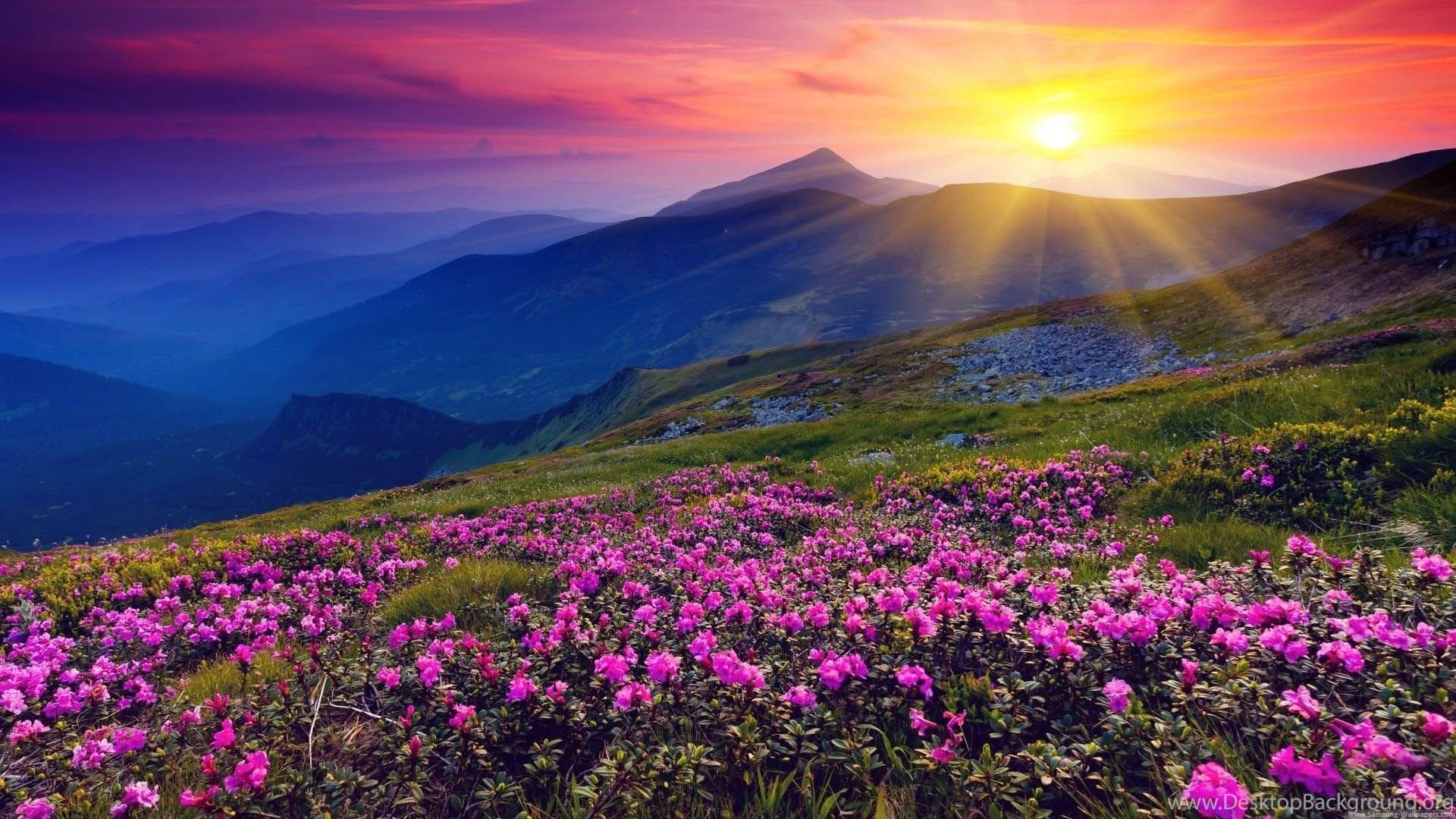 Nature Flower Lock Screen Desktop 1920x1080 Samsung Galaxy S4