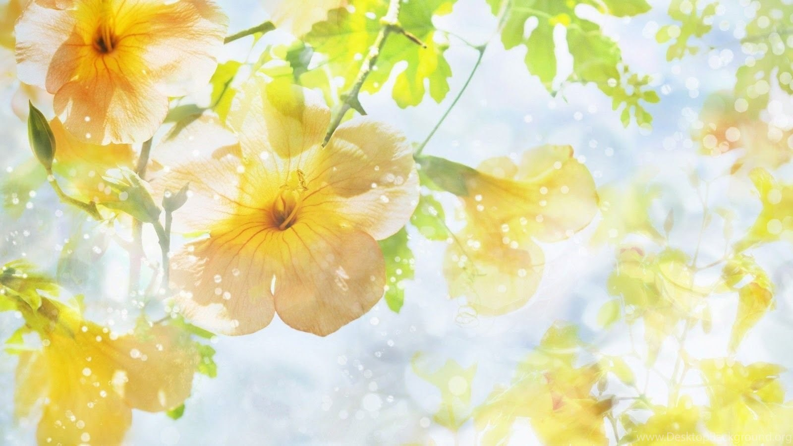 Image result for yellow background hd pinterest