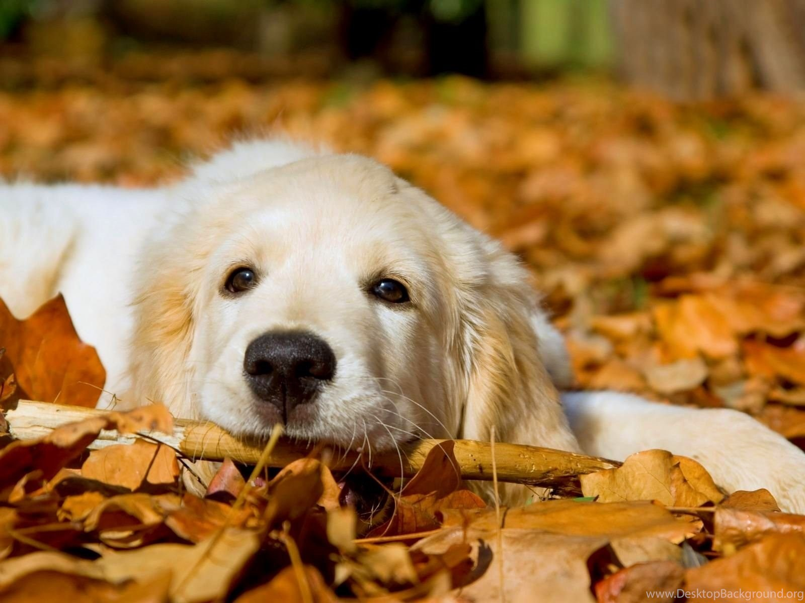 Cute Dog Hd Wallpaper Cute Dog Images New Wallpapers