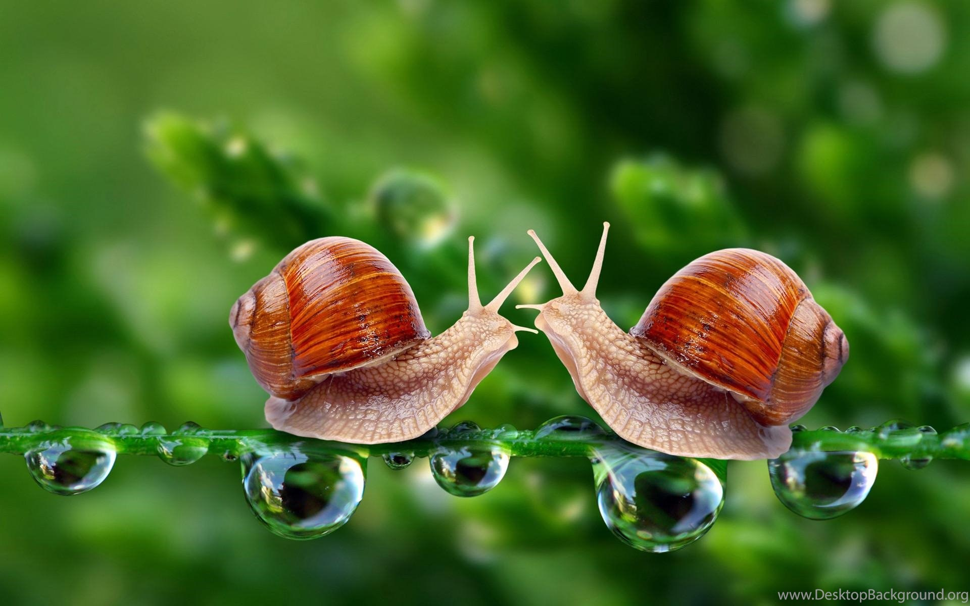 beautiful 3d love wallpapers insects hd wallpapers desktop desktop