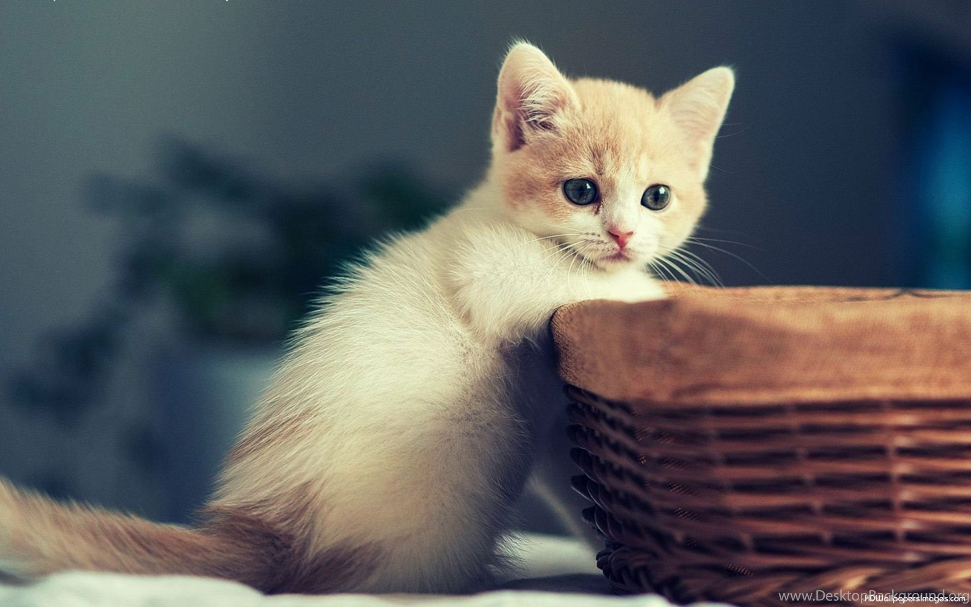 Simple Wallpaper Mobile Kitten - 156968_cute-kitten-wallpapers-for-android-mobile-hd-one-punch-man_1920x1200_h  You Should Have_845272.jpg