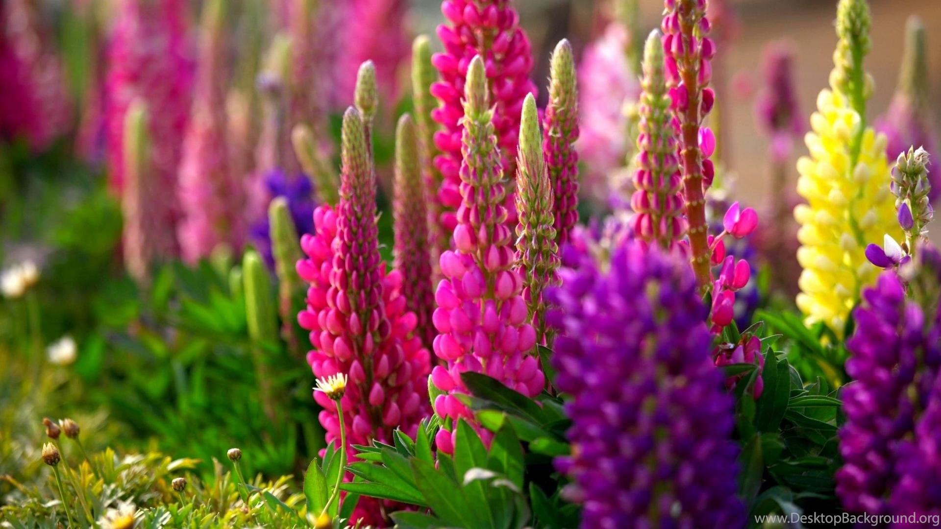 Download Free Hd Wallpapers Nature Spring Desktop Background