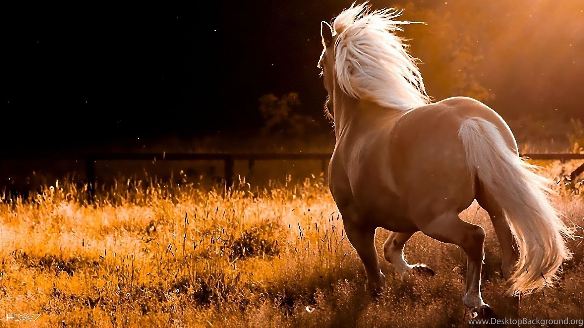 White Running Horse Wallpapers Desktop Background