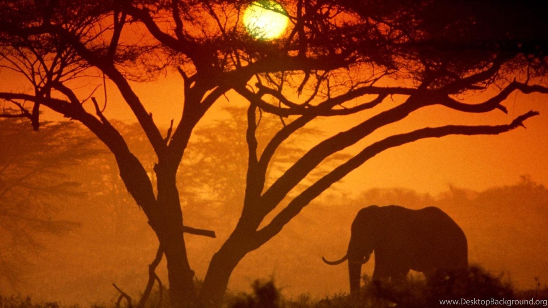 Sun Trees Animals Elephant Africa Nature Hd Wallpapers ( Desktop ...