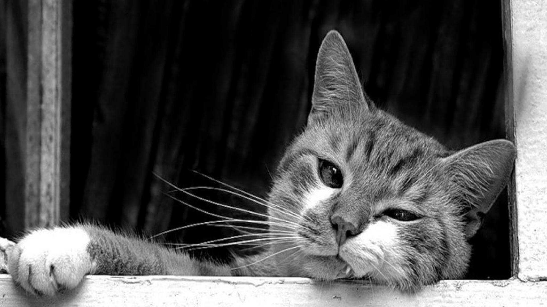 Black And White Cat Wallpapers Desktop Background